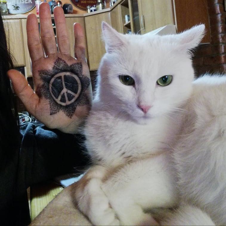späť mačička pic XXX vidos XXX